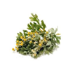 Dried Common Wormwood (Artemisia absinthium)